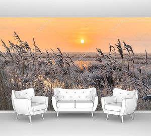 Седой мороз на тростнике на закате