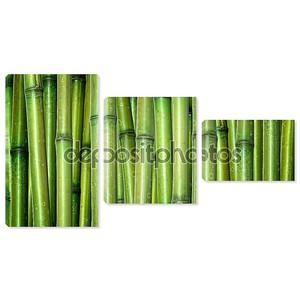 Свежий бамбуковых фон