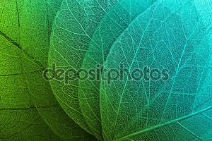 макро листья фон