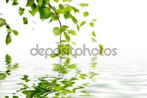 Филиал березы и отражение в воде