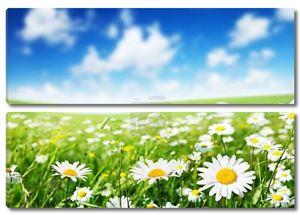 Красивое поле цветов