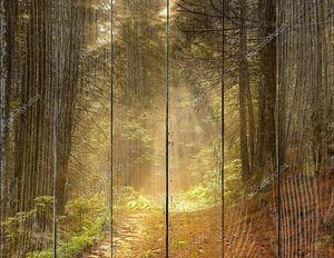 Солнечные лучи пробиваются сквозь лес