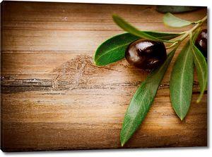 Оливка на зеленой веточке