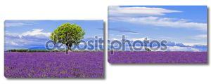 панорамный вид поля лаванд с деревом