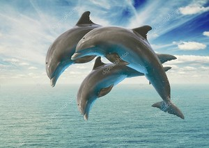 Три дельфина прыгать