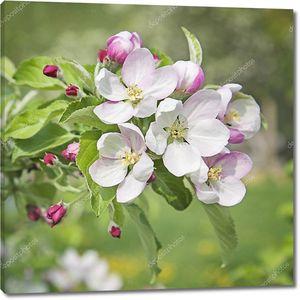 Цветущие цветки персика