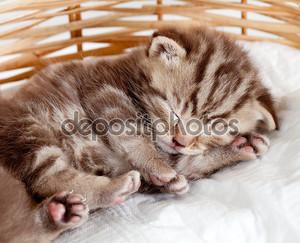 Смешные Спящая кошка котенка ребенка в плетеной корзине