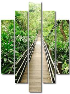 Пешеходный мост. Деревянный мостик в тропических джунглях