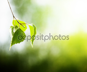 Листья березы в лесу