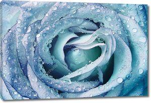 красивые влажные Голубая роза