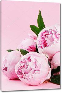 Розовые пионы на пастельных фоне