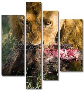 Король животных лев отдыхая