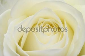 Заделывают из белых роз сердце