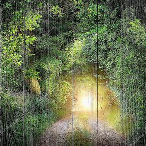 Туннель деревьев, ведущих к свету