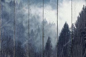 Туманный лес холодным утром