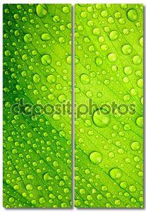 Красивый зеленый лист с каплями воды