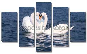 лебеди влюбляются