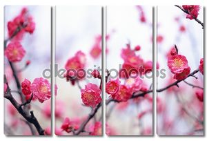 Цветы и растения весной