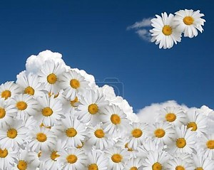 Цветочные Небесный фон