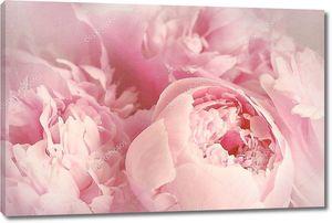 крупный план цветка пион