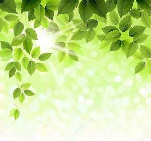 летнее отделение со свежими зелеными листьями