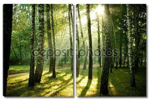 Лучи солнца утром в Осенний парк