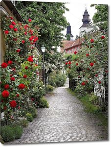 Аллея роз