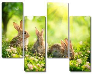 Кролики на полянке