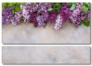Розовые и фиолетовые соцветия сирени
