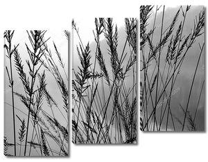 Группа растений