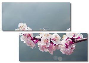 Вишни в цвету с мягким фокусом, Сакура сезон фон