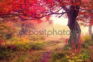 Осенний лес_