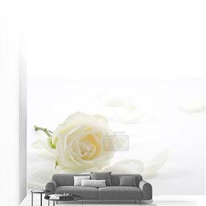 Белая роза с лепестками крупным планом