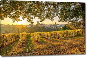 Виноградники  Модены, Италия