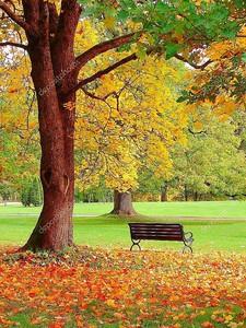 Осень в Хельсинки городской сад