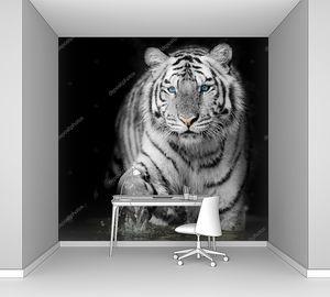 черный & белый тигр