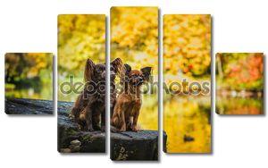 Пара собачек осенью на природе