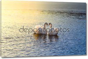 два лебедя, формируя сердце