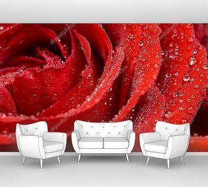 Красная роза с каплями