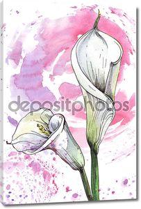Калла цветок Акварельные иллюстрации