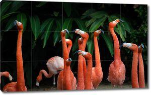 Коралловые фламинго