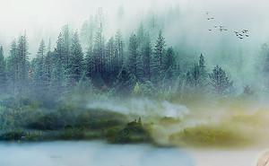 Цветная туманность леса