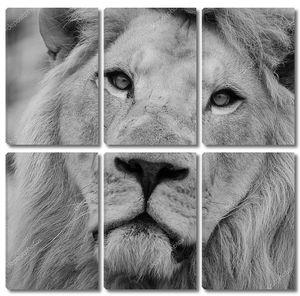 Портрет мудрого льва