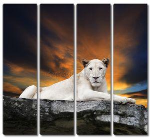 закрыть лицо белой львицы лежала на рок скалы против краси
