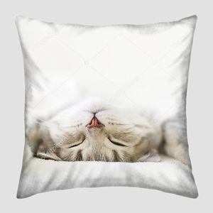 Спящая кошка. Шотландский прямой кошка