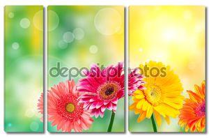 цветы gerber