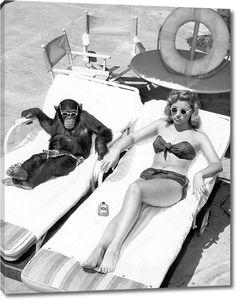Шимпанзе и женщина загорают