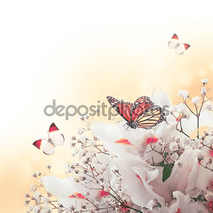 белые ирисы против зеленой травы, Лето бабочка