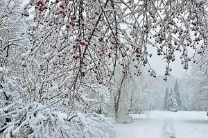 снегопад в городском парке - зимний фон
