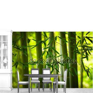 Фон бамбуковый лес